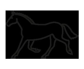 picto Horse