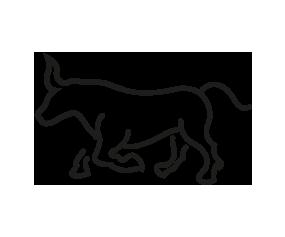 picto Bull